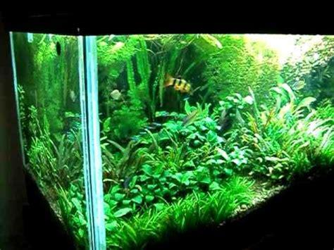 Mi Acuario Plantado Noviembre 2010 - YouTube