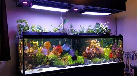 Mi acuario plantado sin algas el secreto de mi rutina de ...