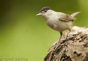 Migrating birds travel to UK rather than Spain because of ...