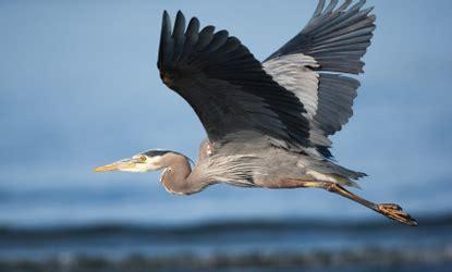 Migratory Birds | City of Fort Worth, Texas