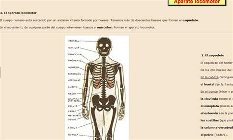 MilagroTIC: C. NATURALES - 5º - TEMA - 3 - EL APARATO ...