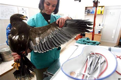 Mira Bolivia   Foro: Veterinaria. Atención en salud a los ...
