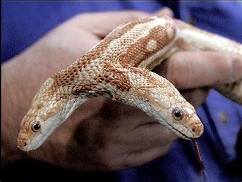 Mis Trabajos: Informacion sobre las serpientes