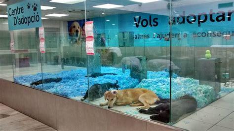 ¡Mister Guau ya no venden perros ni gatos! -DogBuddy Blog
