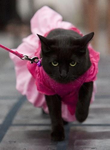 Moda Felina      BLECKiM    O gatinho que chupa dedo