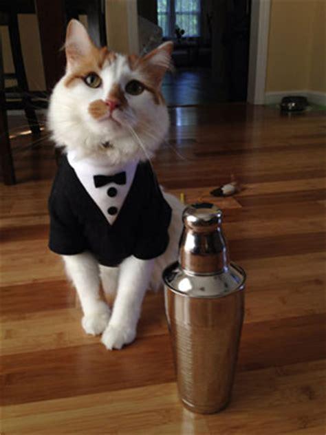 Moda para Gatos - Disfraces, sombreros, corbatas y trajes