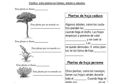 Modelos didácticos para primaria: Las plantas.Aplicamos ...
