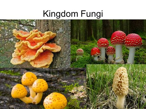 Module 4 Kingdom Fungi October 1, ppt video online download