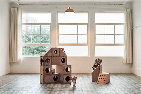 Módulos de papelão que se encaixam são a casa perfeita ...