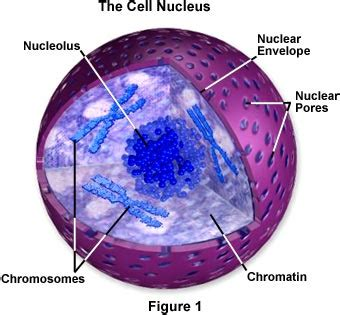 Molecular Expressions Cell Biology: Plant Cell Structure ...