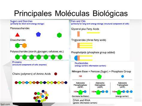 MOLÉCULAS BIOLÓGICAS. - ppt descargar