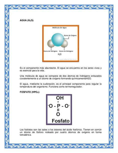 Moleculas organicas e inorganicas en el proceso vital