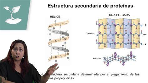 MOLÉCULAS ORGÁNICAS/PSU BIOLOGÍA/CLASE Nº3 - YouTube