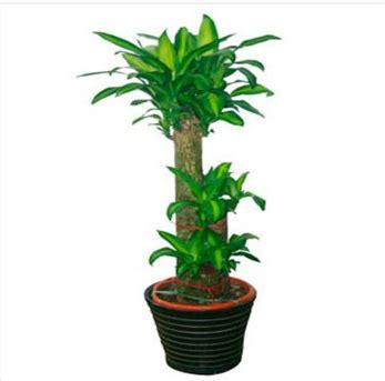 Money Plants Feng Shui