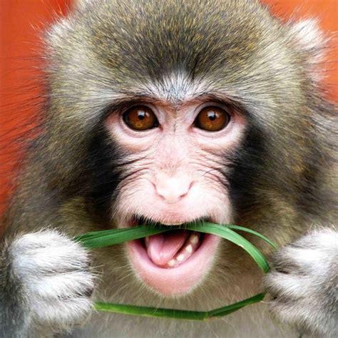 Monkey Animals Free Image High Defination Wallpaper Download