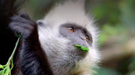 Monkey | San Diego Zoo Animals & Plants