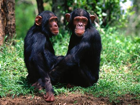 Monkeys images Monkeys HD wallpaper and background photos ...