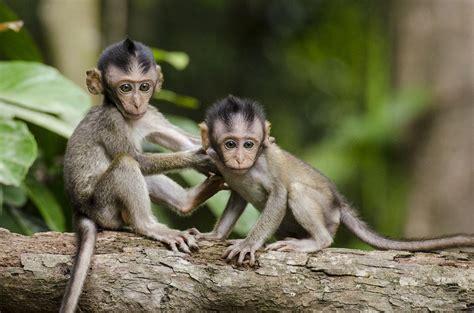 Monkeys Nature Animals · Free photo on Pixabay