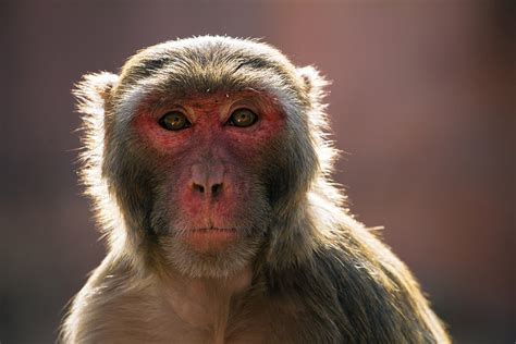 Monkeys   Pictures, Interesting Facts and Experiments
