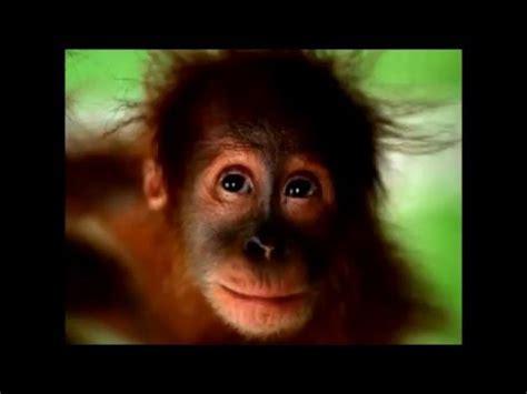 Mono canta feliz cumpleaños   YouTube