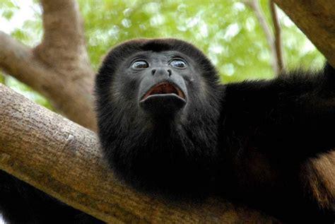 Mono negro :: Imágenes y fotos