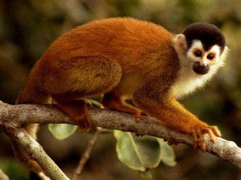 ¿Mono o simio? | La guía de Biología