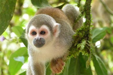 Mono Selva Animales América Del · Foto gratis en Pixabay