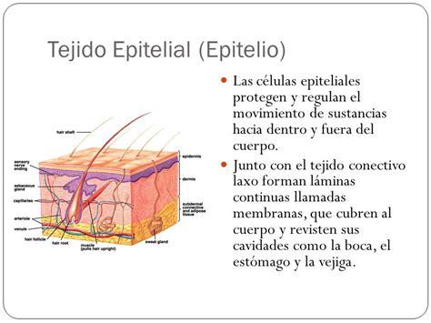 MONOGRAFIASPARAVOS: EL TEJIDO EPITELIAL