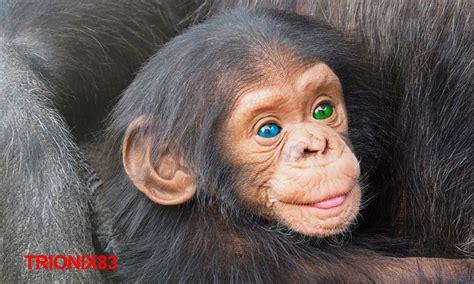 MONOS BEBES – Monitos bebes: Changuitos bebes – Changos ...
