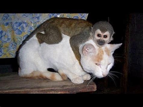 Monos Chistosos Molestando A Perros Y Gatos - Videos De ...