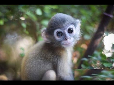 Monos Chistosos y Traviesos. Video (funny monkeys)-HD ...