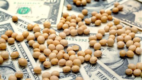 Monsanto pushes farmers to grow bee killing soybeans ...