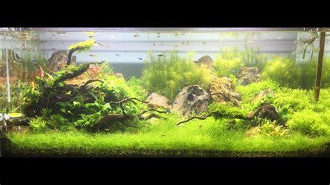 Montaje acuario plantado de 300 litros   YouTube
