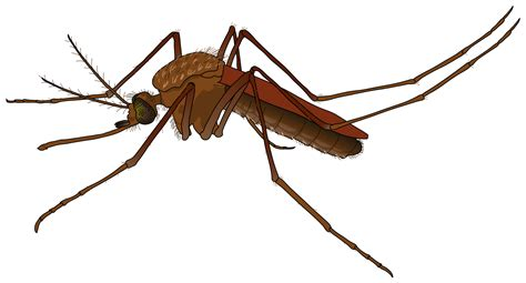 Mosquito HD PNG Transparent Mosquito HD.PNG Images.   PlusPNG