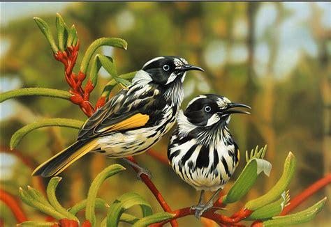 Most 10 Beautiful Birds Latest HD Wallpaper 2013 | Top hd ...