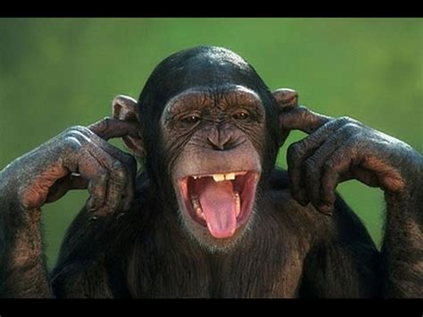 Most Funny Monkey - TOP Video Funny Animals 2015 Tori N ...