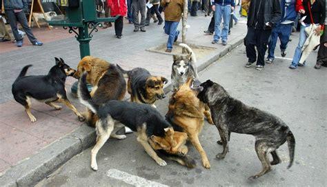 Movilizaciones en todo Chile hoy contra la Ley de Caza ...