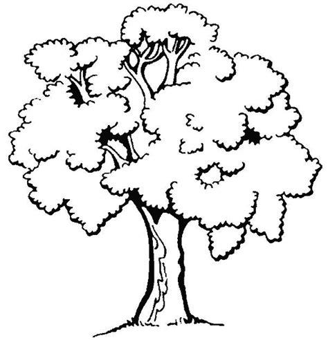 Moving Tree S.R.L.   Trasplante y provisión de árboles ...