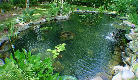 Mundo de las Flores: Jardinería (Cómo construir un estanque)