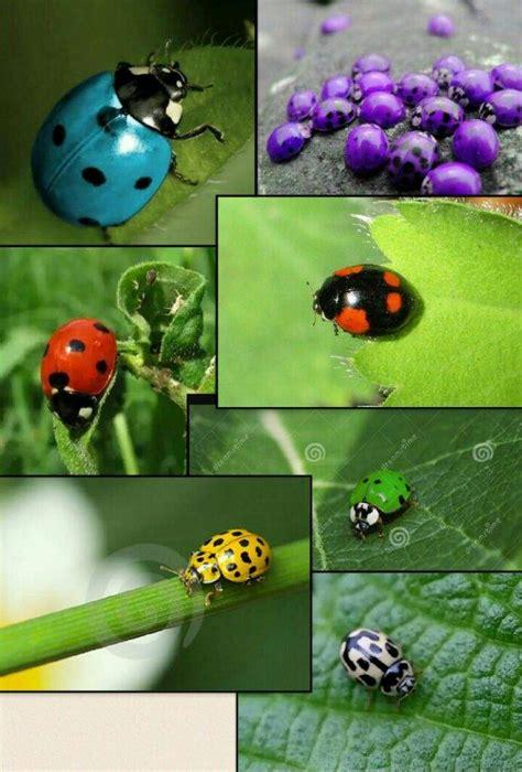 MUNDO DE MARIQUITAS ???? | •Miraculous Ladybug Español• Amino