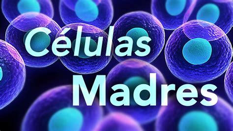 Mundo Natural   Las Celulas Madres   YouTube