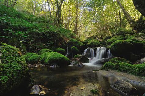 Muniellos: El bosque asturiano con cita previa