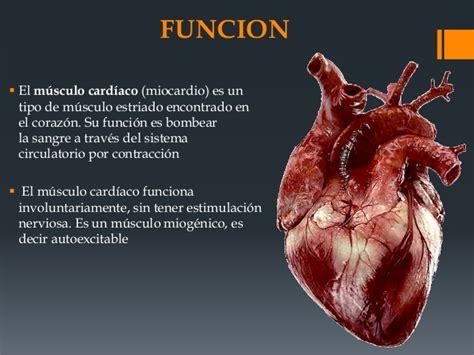 Musculo cardiaco histologia