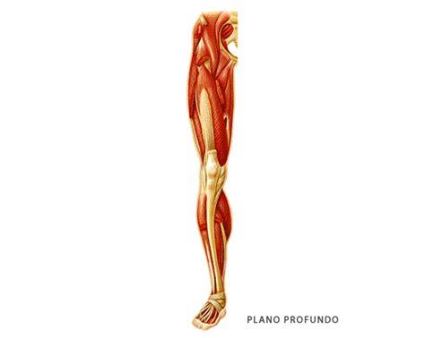 Musculos De La Pierna Pictures to Pin on Pinterest - PinsDaddy
