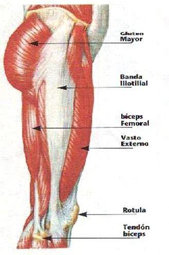 Músculos de la pierna. Visión lateral. Fascia lata ...
