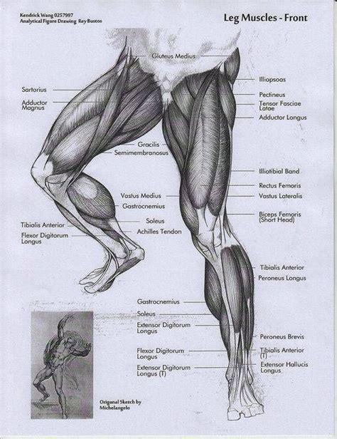 musculos-de-las-piernas | Dibujos | Pinterest | Musculos ...