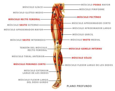 Músculos de las piernas, plano profundo | El cuerpo ...