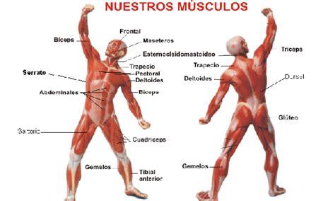 Músculos   ThingLink