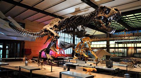 Museo de Ciencias Naturales de Bruselas   Buendía Tours ...