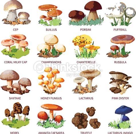 mushroom names